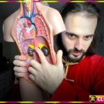 Дыхание для сна – дыхательную гимнастику при аритмии сердца, тревоге и панических атаках показывает Данила Сусак